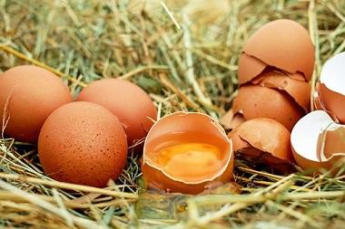 egg-1510449__340[1]